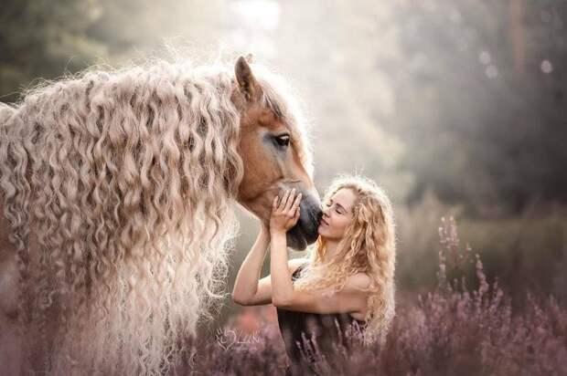 Вы только посмотрите на эти локоны! голландия, девушка, животные, красота, лошадь, фото, шевелюра