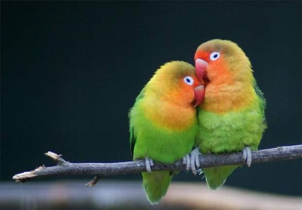 17 животных, которые образуют более счастливые и гармоничные пары, чем люди