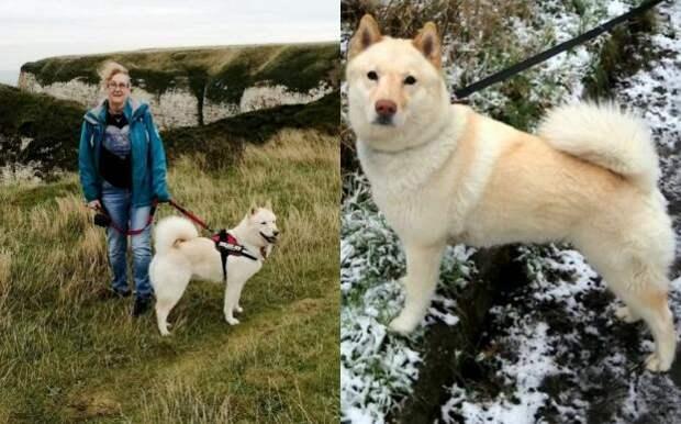 Запертая на два месяца собака выжила, питаясь зубной пастой