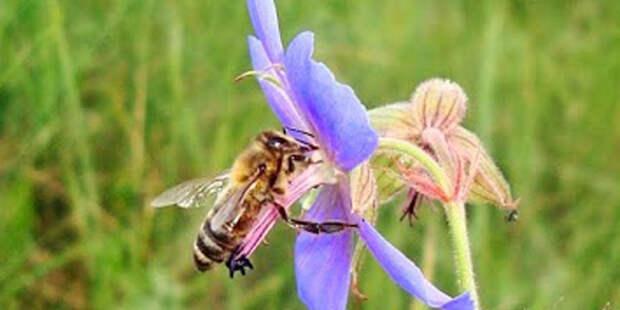 Учёные из Нидерландов научили пчёл выявлять коронавирус