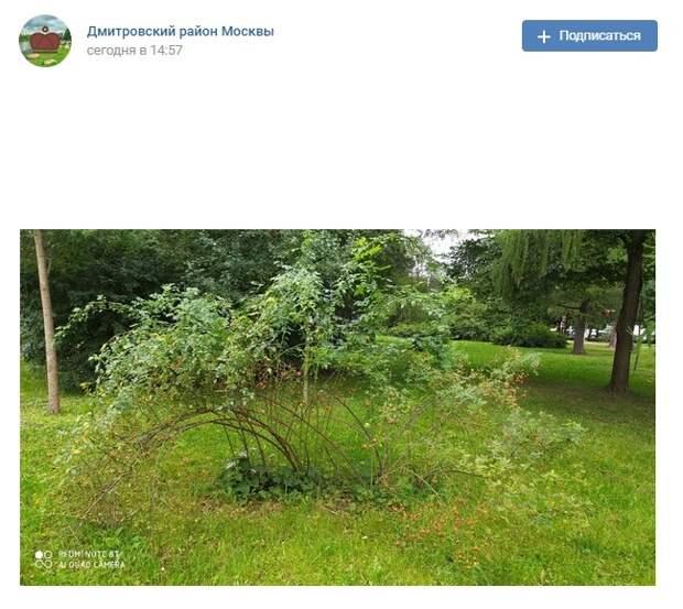 Фото дня: урожай шиповника в парке «Ангарские пруды»