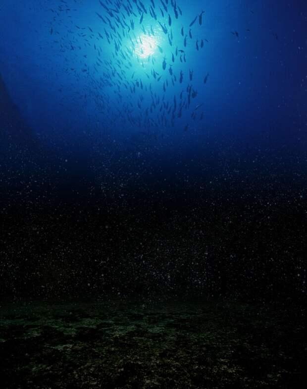 Загадки природы: Биолюминесценция (7 фото)
