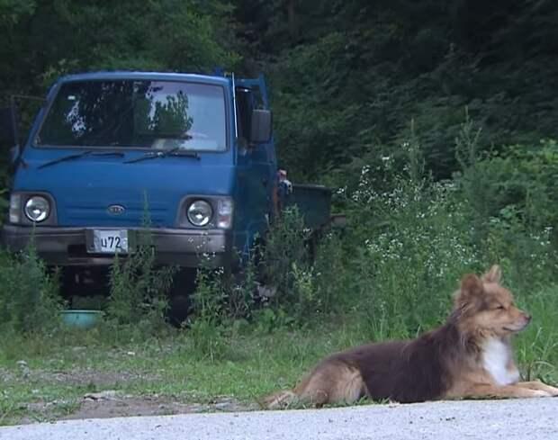 Рядом с проезжей частью в любую погоду бегала собака. Она кого-то ждала, смотря на дорогу