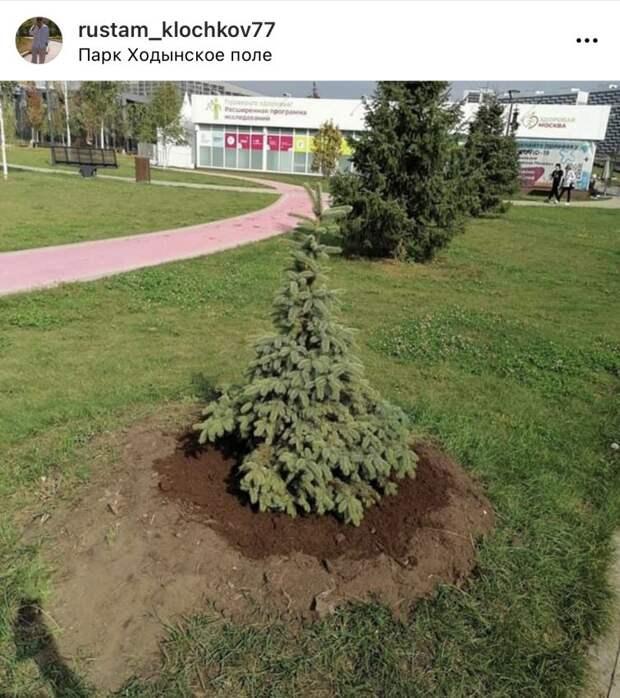 Зелёное семейство на Ходынке пополнилось новыми деревьями