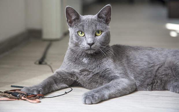 Вот как масть кота может повлиять на судьбу его хозяина
