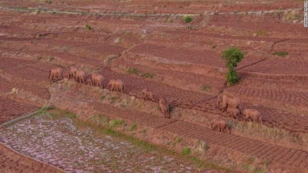 Найден новый способ определять север — по слонам.