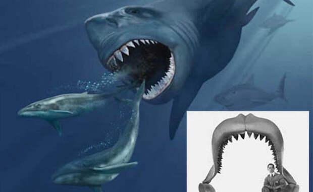 Самые странные акулы, известные нам сегодня