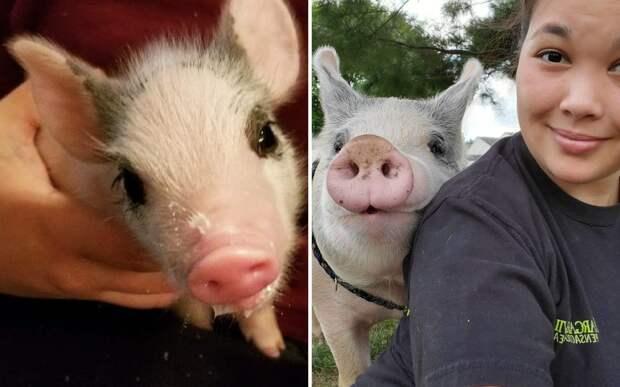 Девушка спасла больного поросенка. Теперь он самый счастливый свин на свете