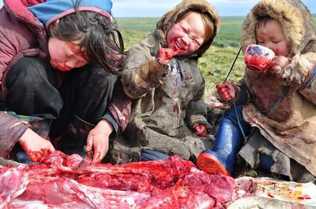 Питание сырым мясом