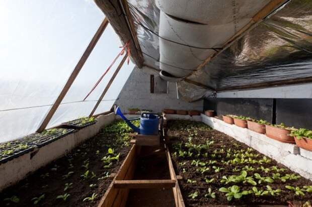 Органическое земледелие, пермакультура: интерьер подземной теплицы