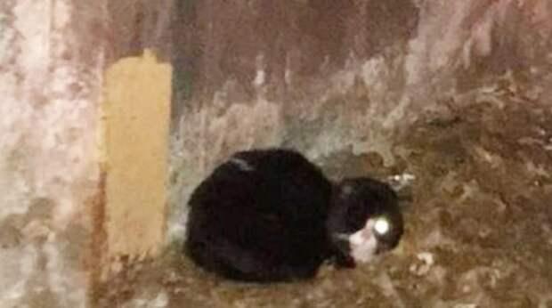 Сотрудники метрополитена не поверили своим глазам: в туннеле сидел полуслепой черно-белый кот