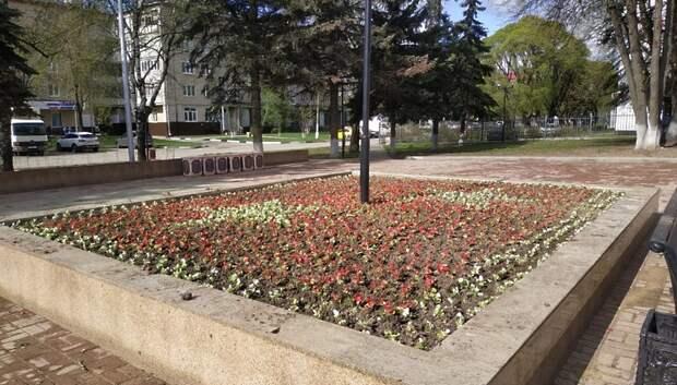 В микрорайоне Климовск зафиксировали случаи кражи саженцев цветов с клумб