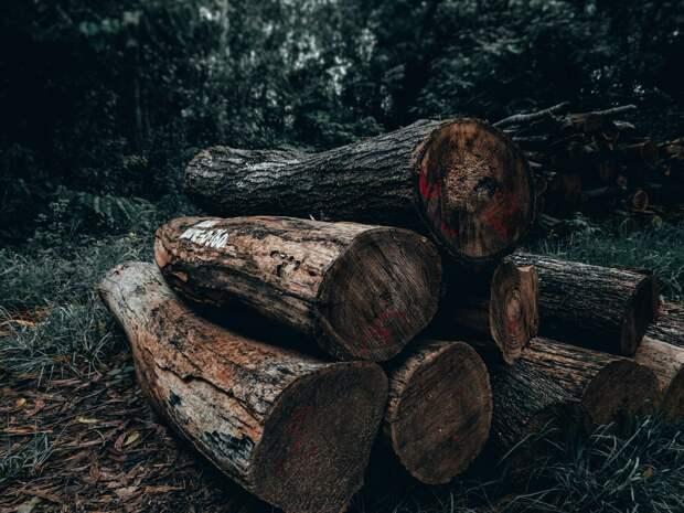В Балезинском районе обнаружили подозрительную вырубку деревьев