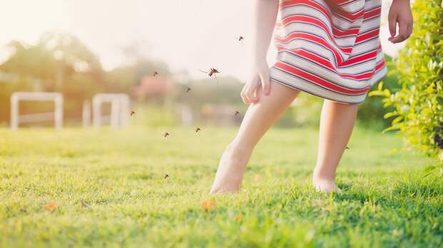 Как спастись от комаров: 10 эффективных средств от укусов