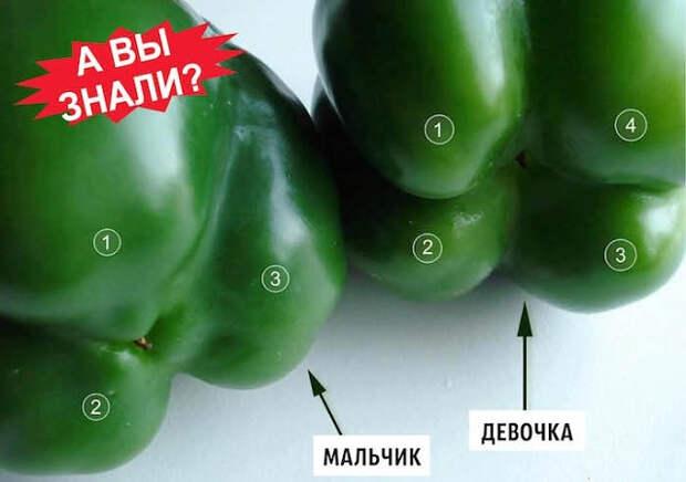 Выбирайте болгарский перец по этому признаку - не прогадаете! Совершенно разный вкус