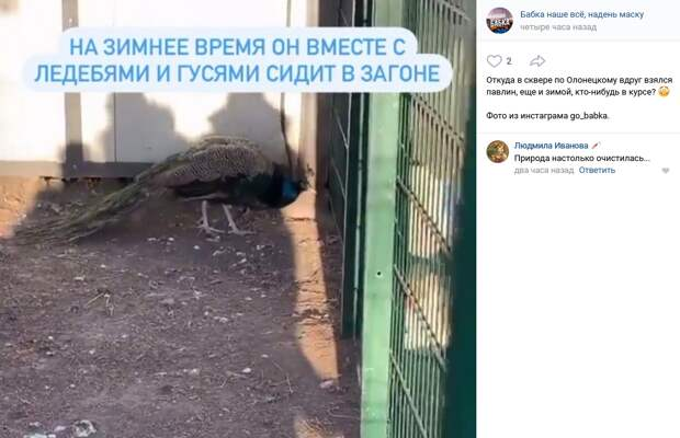 Фото дня: павлин зимует в Бабушкинском