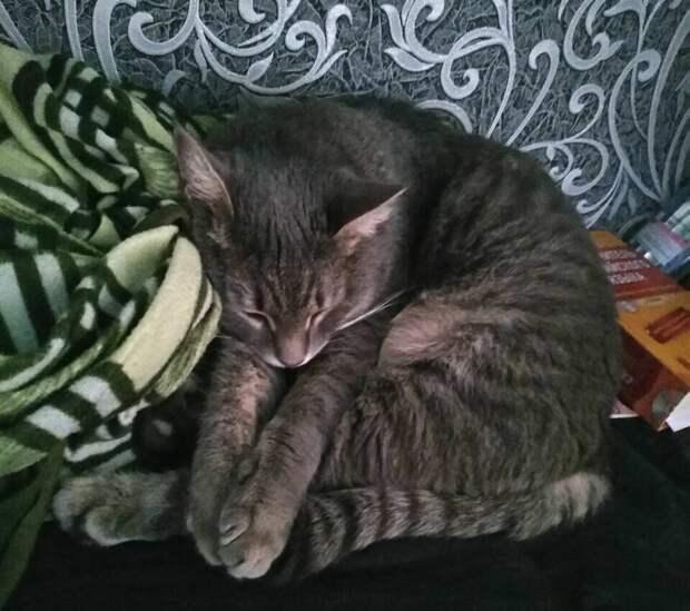 Айчик спит