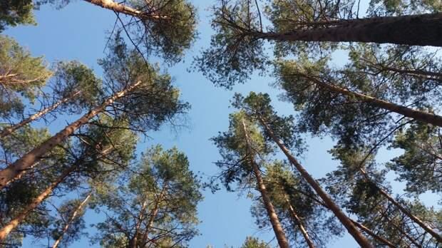 Человеческие останки обнаружили в рязанском лесу
