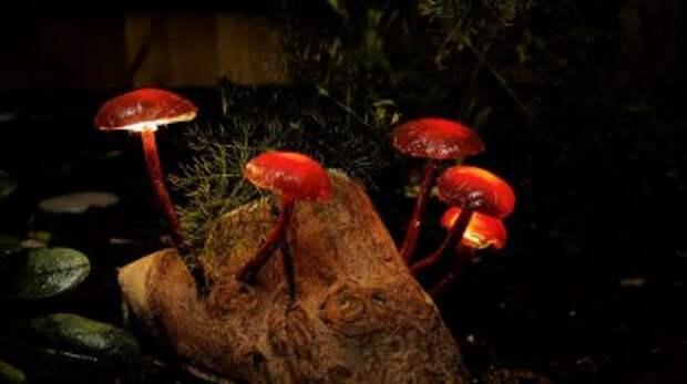 Ночник «Сказочный лес» своими руками