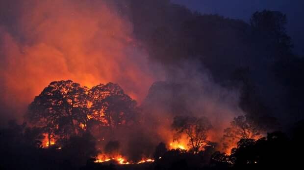 Пожар в джунглях, или как Навальный бросил камень в свою стаю