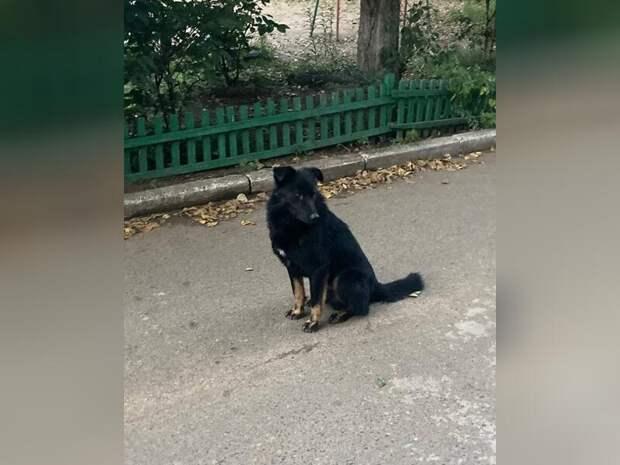 Проект поправок о штрафах за выброшенных животных поддержали в Госдуме