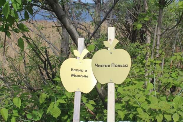 На южной набережной Ижевска появилась яблоневая аллея