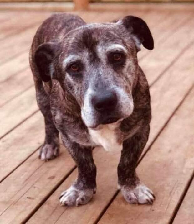 Симпатичный пес с грустными глазами потерял свою семью и надежду опять стать нужным