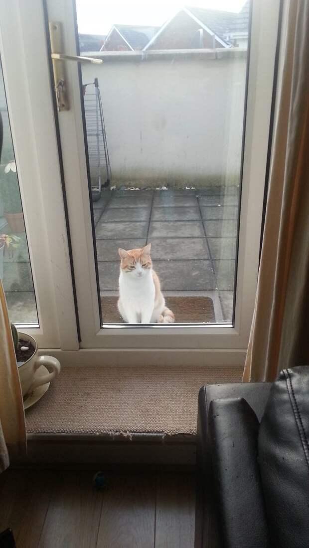 Коты - настоящие мастера подавить на жалость встреча, гости, дружба, животные, коты, кошки, неожиданно, фото