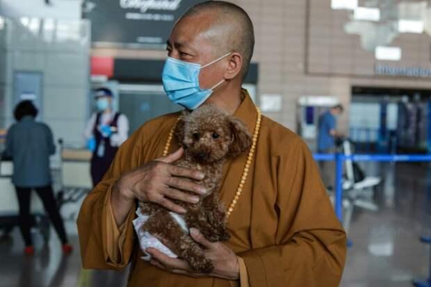 Благая миссия: монах из Шанхая заботится о 8 000 бездомных животных