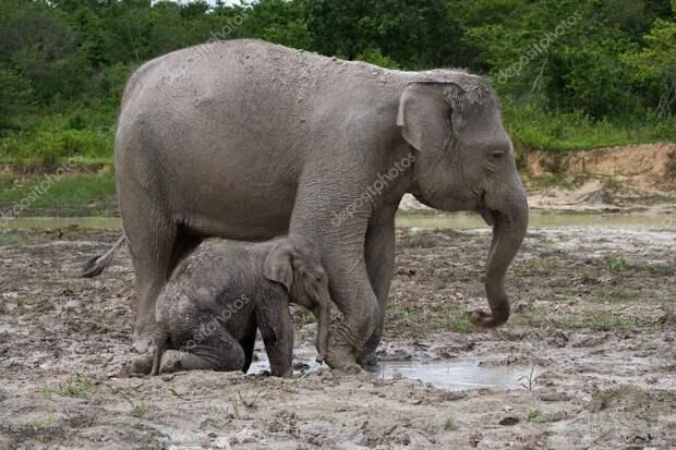 Рассказы о животных 18