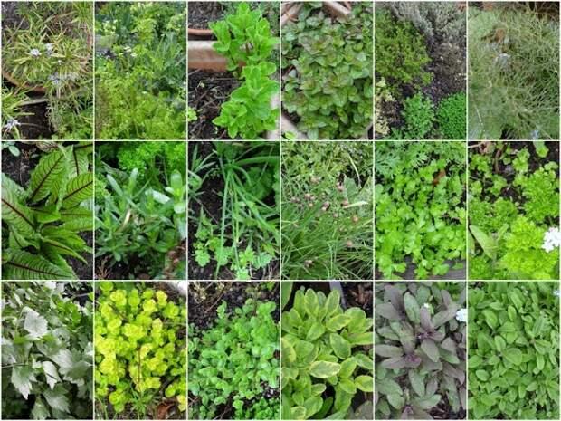 Травы пряности и приправы