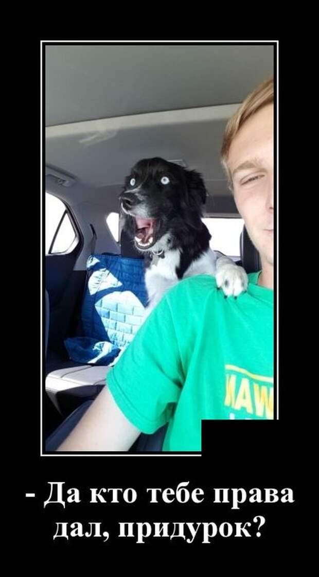 Демотиватор про собаку в машине