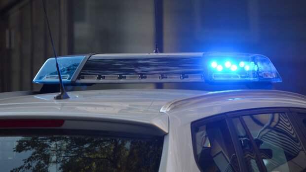Труп мужчины с расческой и фонариком нашли в лесном массиве под Петербургом
