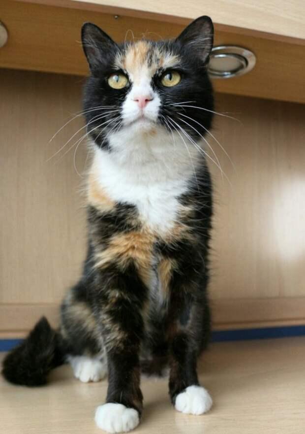 Кошечка редкой красоты ищет родной и единственный дом!
