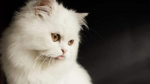 Беременные женщины могут заразиться от кошек опасными инфекциями