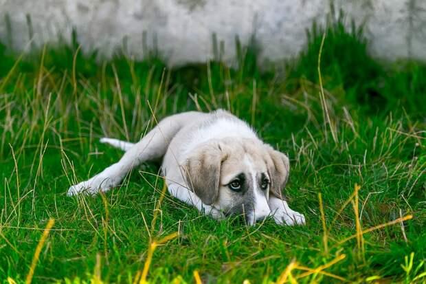 собака в траве