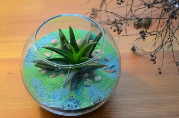 Как составить флорариум из подручных материалов: теория и практика (113 фото)