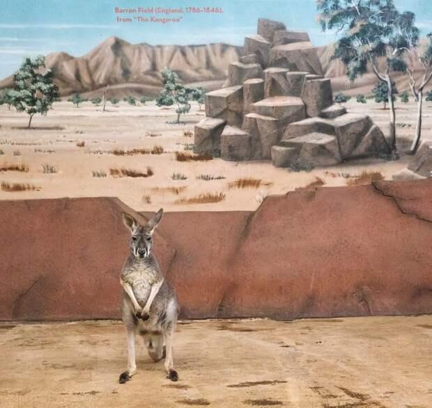 Фотографии животных в неволе, которые навевают грусть