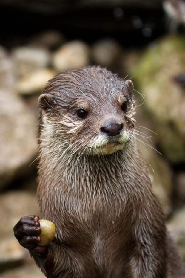 22 неожиданных факта о животных, в которые сложно поверить