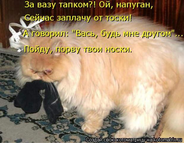 kotomatritsa_U2 (600x466, 232Kb)