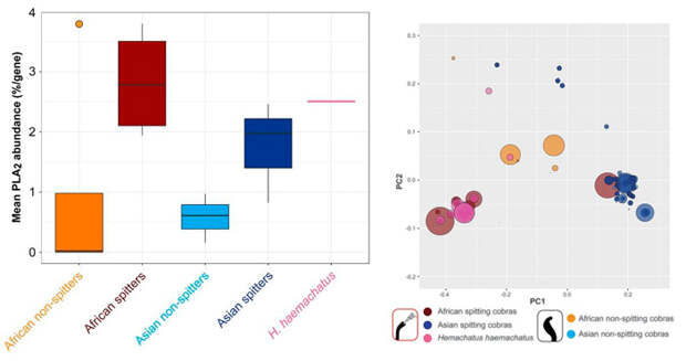 Рис. 4. Уровень экспрессии генов PLA2