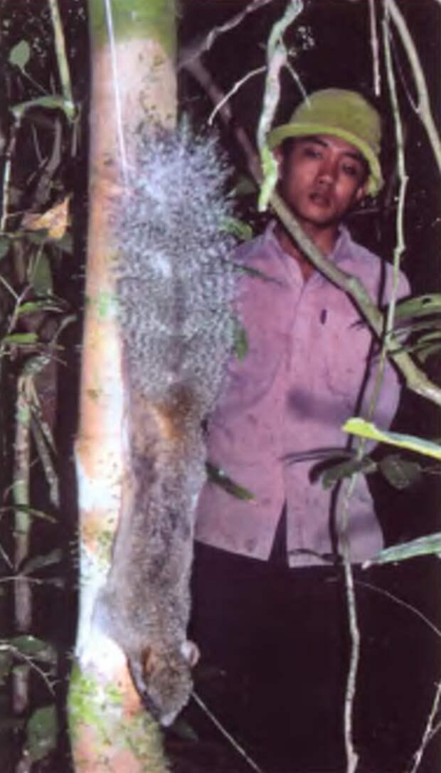 Белки и другие грызуны Вьетнама.