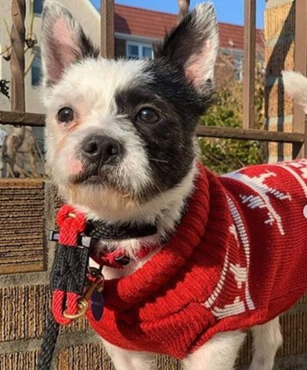 Сообщив о родителях питомца, хозяин без объяснений и сожаления оставил испуганного щенка в приюте