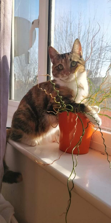 кот и цветы
