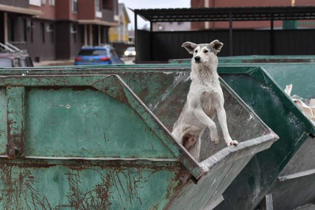 Россиянам напомнили о штрафах за неправильную утилизацию крупногабаритного мусора