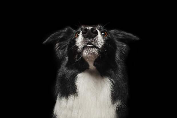 Ученые выяснили зачем собакам холодный нос