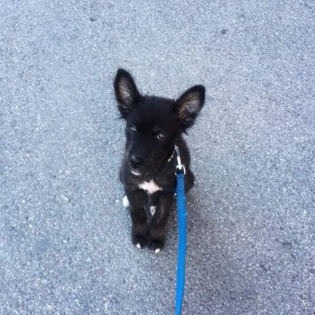 Восемь месяцев жизни с моей первой спасенной собакой