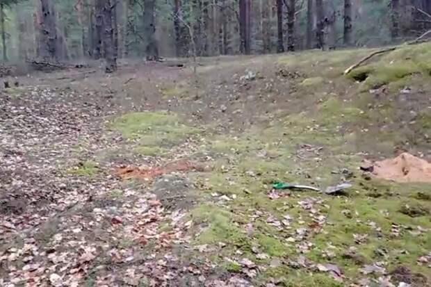 Обнаружена информация о 300 расстрелянных в годы Великой Отечественной войны возле д.Грабово.