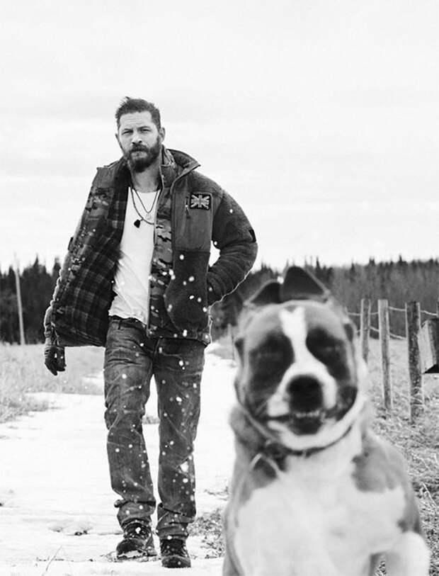 Зимой на прогулке Том Харди, актер, животные, кино, милота, собака, собаки, фильм
