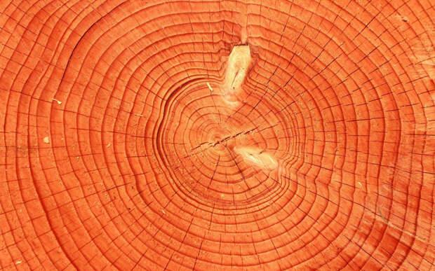 В России тоже есть вековые деревья
